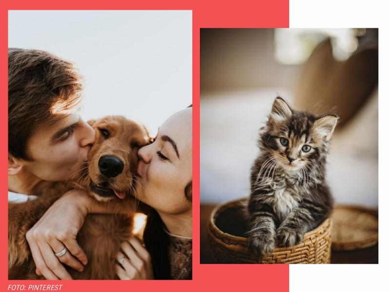 comoadotarumanimalcomconsciencia1 1 - Pet lover: como adotar um animal com consciência?