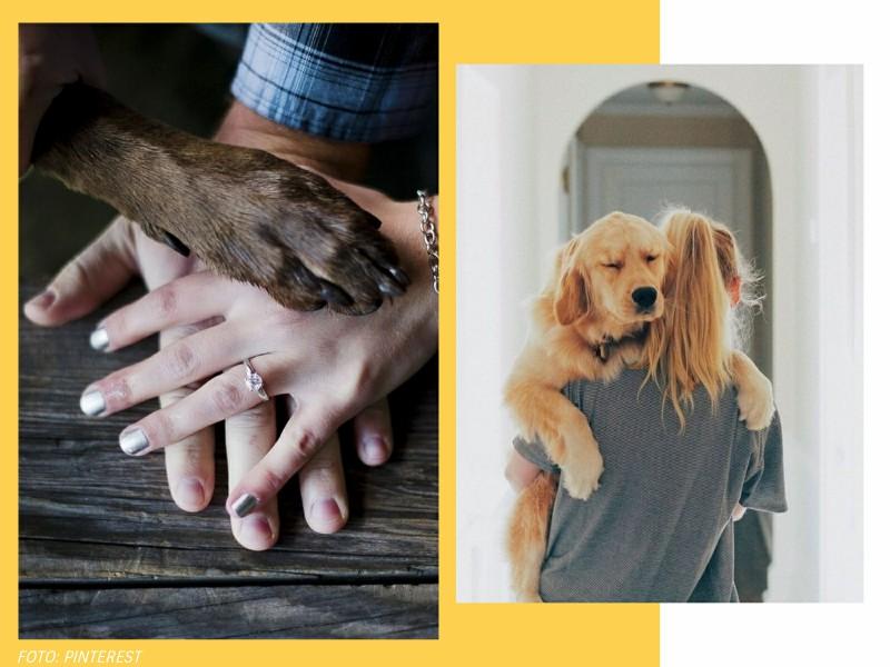 comoadotarumanimalcomconsciencia2 1 - Pet lover: como adotar um animal com consciência?