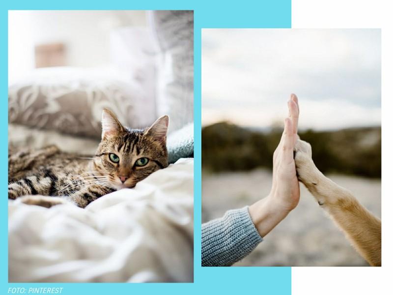 comoadotarumanimalcomconsciencia3 1 - Pet lover: como adotar um animal com consciência?
