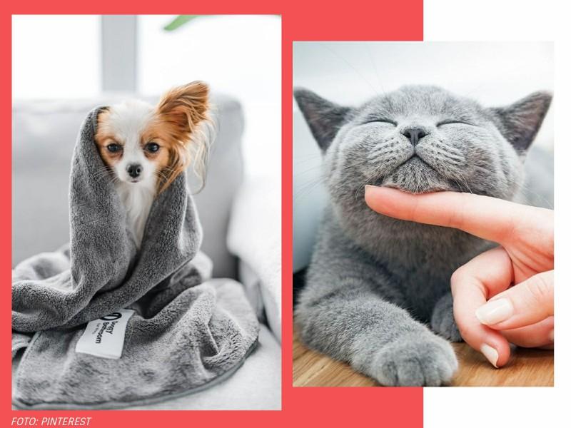 comoadotarumanimalcomconsciencia4 1 - Pet lover: como adotar um animal com consciência?